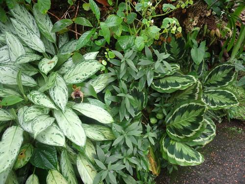 20090919 Edinburgh 20 Royal Botanic Garden 053