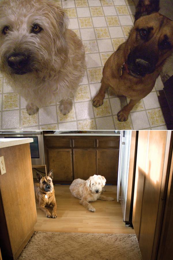 old floor, new floor, same dogs.