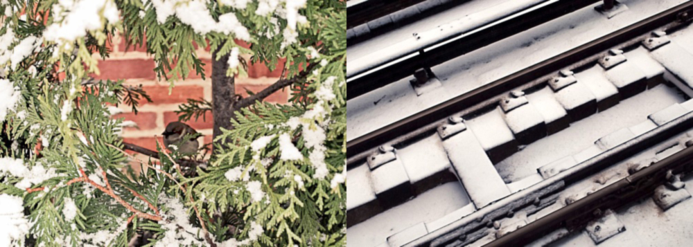 Snow In Sunnyside