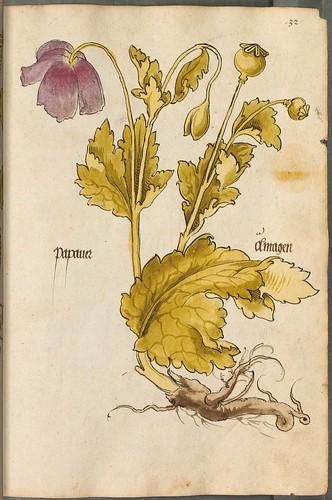 Arzneipflanzenbuch, 1525 i opium poppy