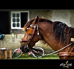 Ted (ollieTrink) Tags: brazil horse color texture textura praia beach animal animals rio brasil digital photoshop canon rebel grande reflex do ollie 7d dslr litoral cor cavalo sul osório mywinners ollietrink