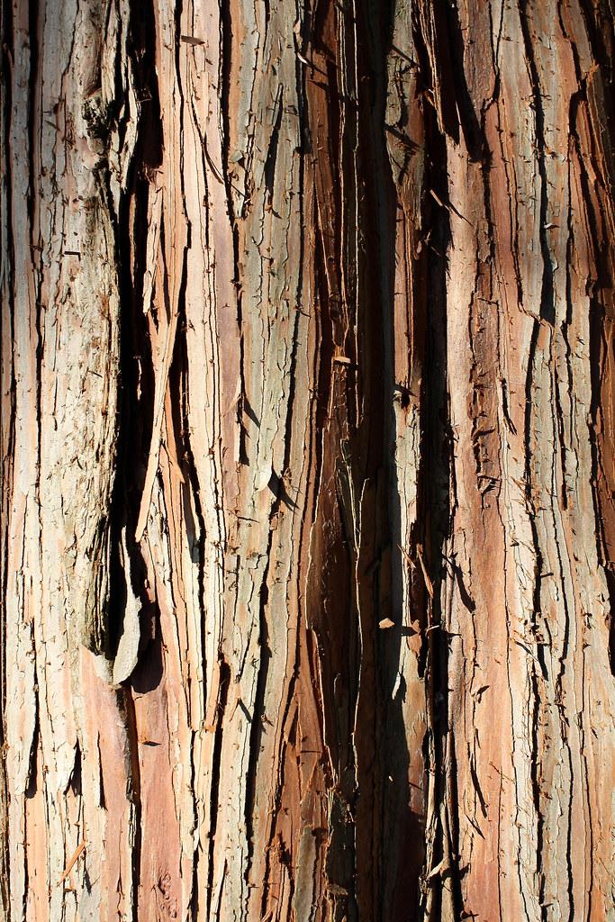bark 2-1