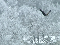 Viewing the bald eagles (DrStarbuck) Tags: winter eagle baldeagle icefog lakewisconsin frozenfog eaglewatching saukcitywi
