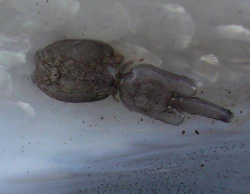 Jay Nicholas Sea Lice 4