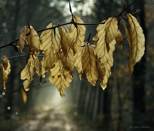 Behind the leaves....