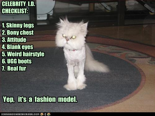 funny-pictures-cat-has-lion-cut