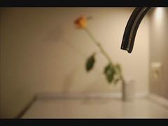 Drops. (Lietuje) Tags: motion video drops stop