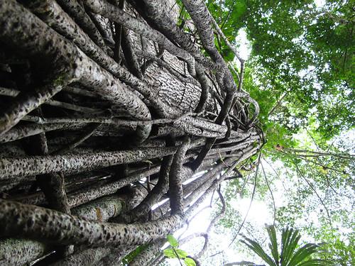 Ruins of Tikal - Guatemala