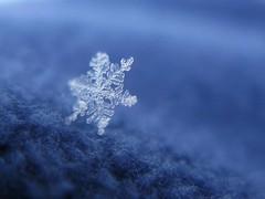 it is way too cold outside tonight (**MIKA**) Tags: schnee ice eis schneeflocke eiskristall icecystal bokehlicious