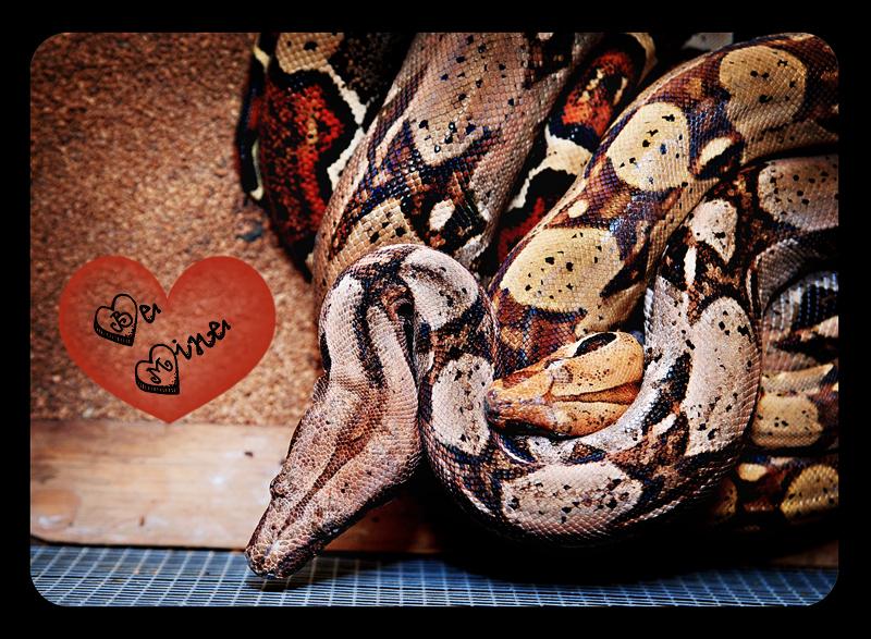 snakeluv 002 copy