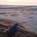 Turtle Dawn