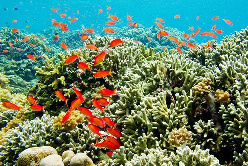 Bunaken Underwater 06
