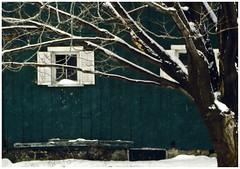 Snowy Barn on Ektachrome 1981 (hz536n/George Thomas) Tags: winter snow tree green film barn 35mm lab december ae1 michigan scan 1981 february canonae1 ektachrome 2010 smrgsbord konicaminolta cs3 labcolor dimagescandualiv hz536n