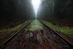 (Pontistang) Tags: wood brown mist canada green misty fog vancouver train point island vanishingpoint nikon traintracks january foggy tracks rail railway vancouverisland transportation vanishing d40x