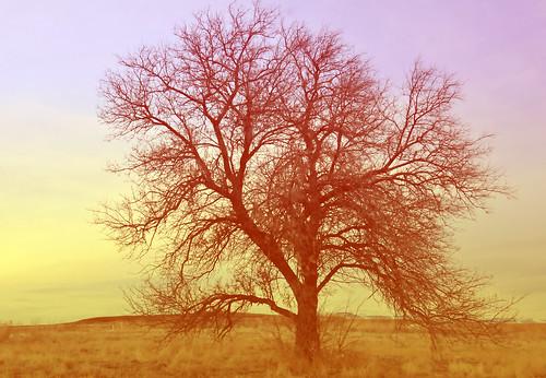 tree silhouette ss utah hard light