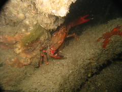 Crab hiding under some rocks
