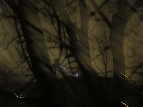 La forêt III