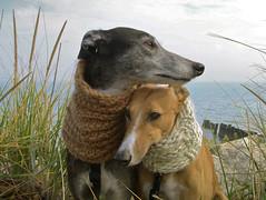 October wind (bredlo) Tags: greyhound lake wool grass scarf michigan prairie evanston