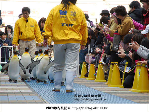 【via關西冬遊記】大阪海遊館~冬季限定!無敵可愛企鵝遊行來囉!23