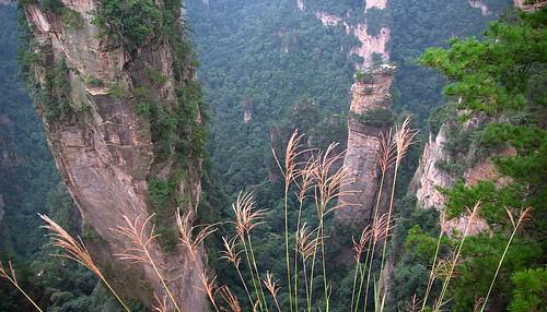 Zhangjiajie (Wulingyuan)  23: miscanthus sinensis