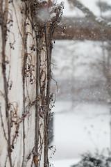 Snow Studies 4
