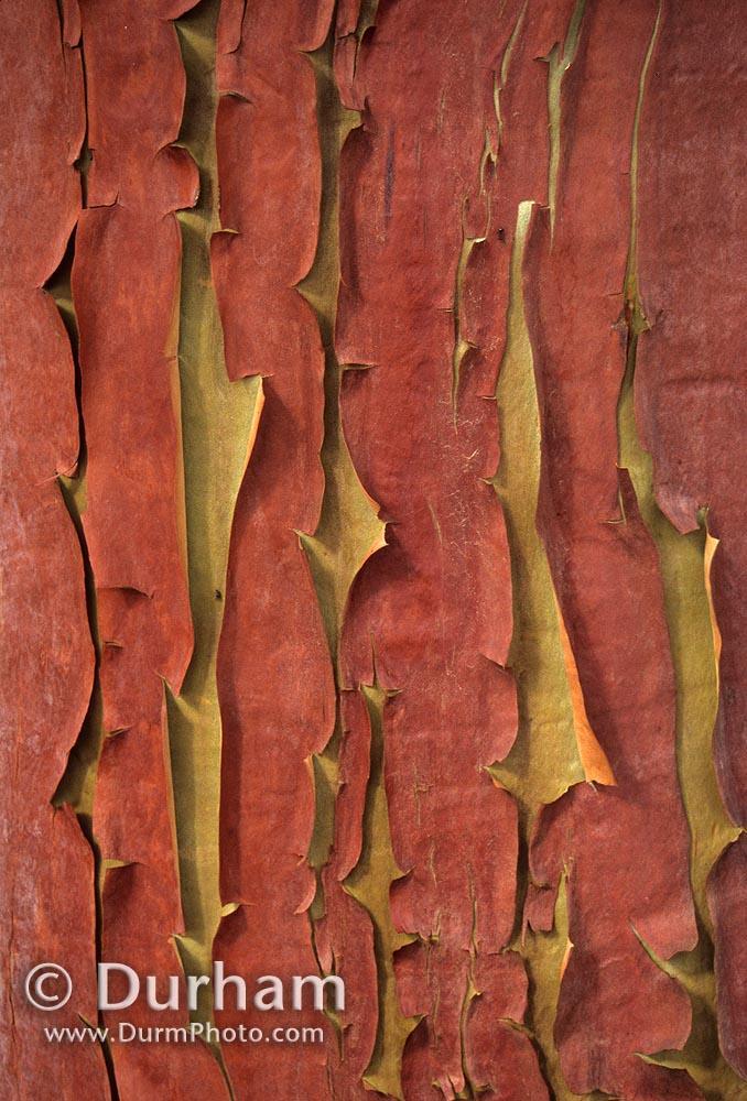madrone bark