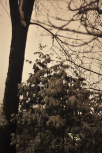 Winter blackout