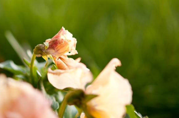 2010-02-18 Garden_6