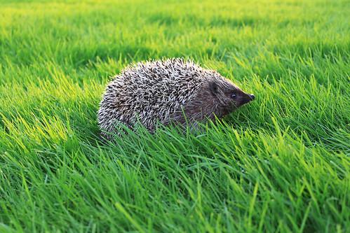 Taras in the grass