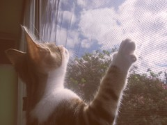 i wish i was a bird (Solipsism Prism) Tags: sky cats window freedom finestra dreams wishes gatto sogno
