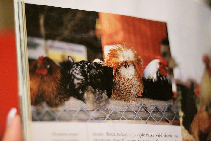 03-11-chickensmag3