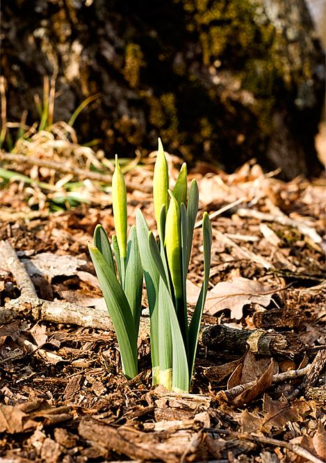 croquet march 7   12