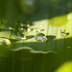 every cloud has a silver lining....... (atsjebosma) Tags: light sunlight macro green nature leaves garden drops bokeh thenetherlands explore raindrops groningen regendruppels zonneschijn supershot naregenkomtzonneschijn gotasdrops atsjebosma