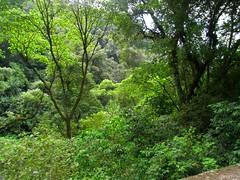 RIMG5993x1000 (Weltbummler) Tags: yerbabuena tucumn bosquenublado nuboselva