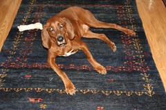 Hound dog Dan on Persian Gabbeh (Kush Hand-Knotted Carpets Rugs Portland Oregon) Tags: orientalcarpets arearugs tribalrugs