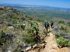 Tucson is looking closer~ (j2davis2005) Tags: arizona hiking jeremy saguaronationalpark