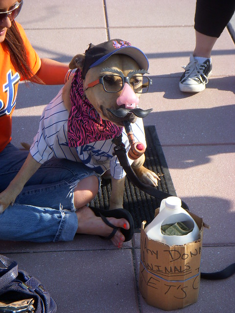 A Dog In Bobby Valentineu0027s Disguise On Mets Opening Day (via Excalipoor).