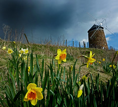St Monan's Windmill Daffodils (g crawford) Tags: flowers sky cloud flower mill church windmill clouds scotland skies fife scottish windmills daffodil mills daffodils crawford scots stmonans monans saintmonans