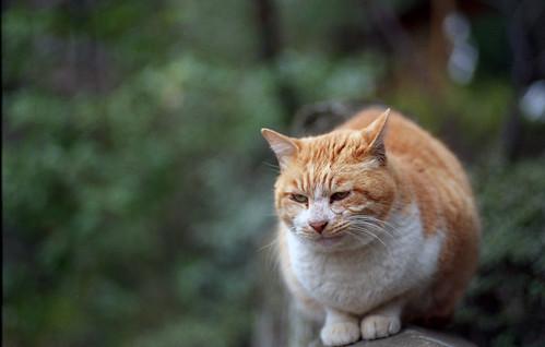 毎度おなじみの猫ちゃん