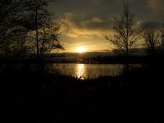 Icelandic ash sunset piccardthofplas groningen 1