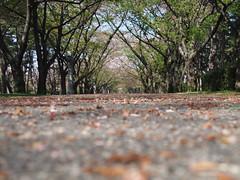 辰巳の公園。気持ちいい!