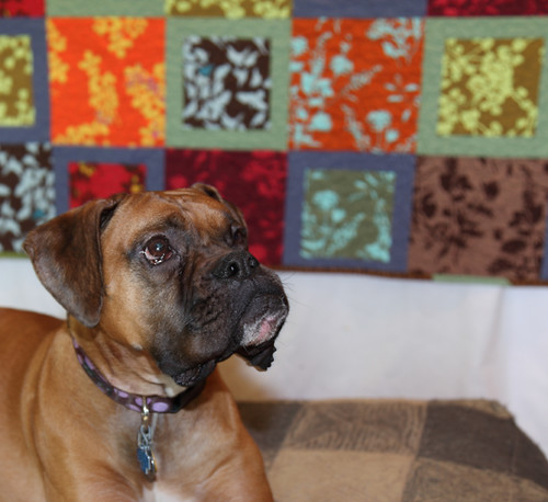 Friday posing in front of the wedding quilt