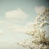 clouds & dogwood (Olivia Joy StClaire) Tags: flowers blue ohio white clouds 50mm spring heart joy arboretum newark dogwood wispy airy lightroom dawes cornus dawesarboretum heartcloud ojoyous1 thankssapaho
