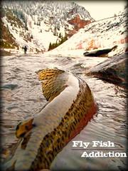 taylor fishing spring-sig4