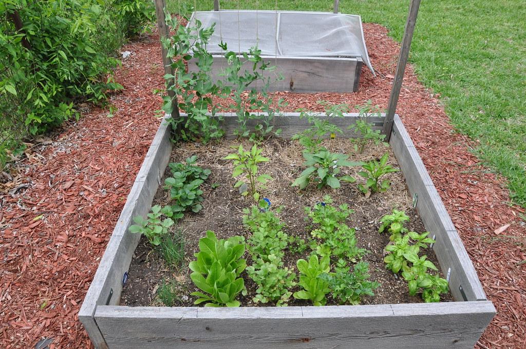 garden 4.22.2010