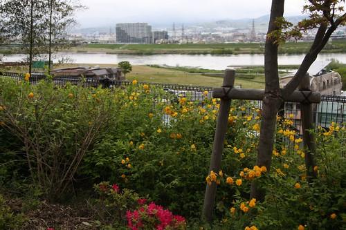 春~お茶屋御殿跡から淀川を望む