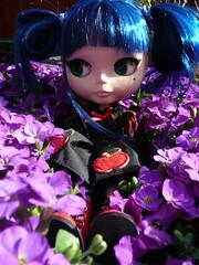Violet in purple