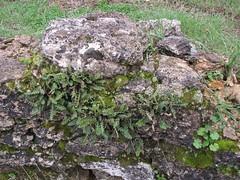 colonizzazione a licheni