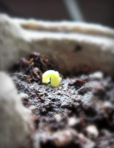 seeds5_042310