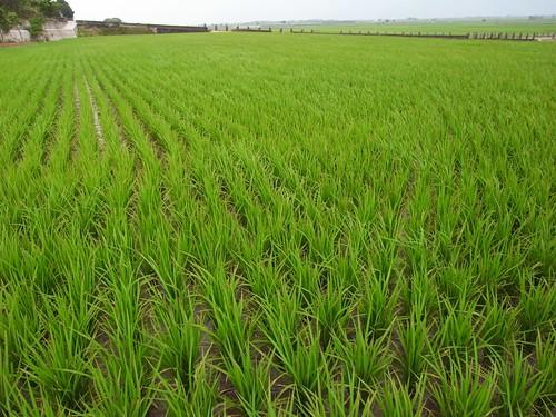 農夫直購 蕭大哥的田 2010年4月24日